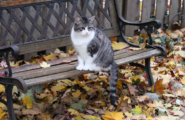 cat-and-fall-leaves
