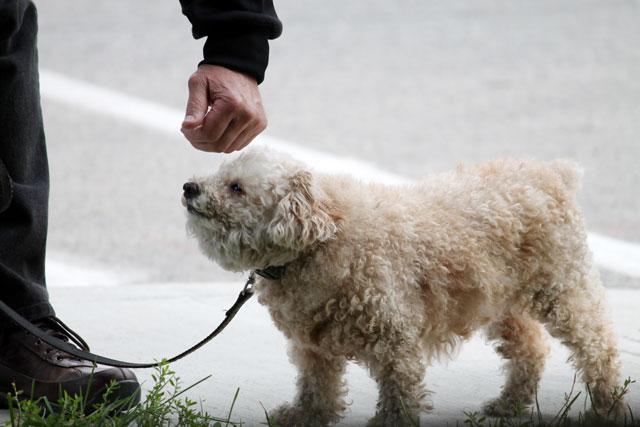 cute-dog-05