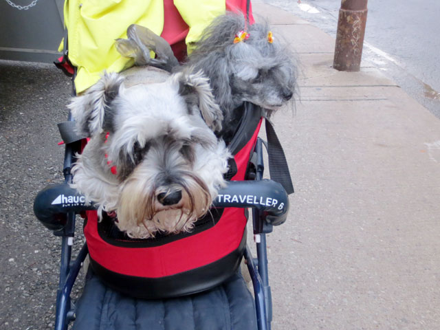 dogs-in-a-carriage-01