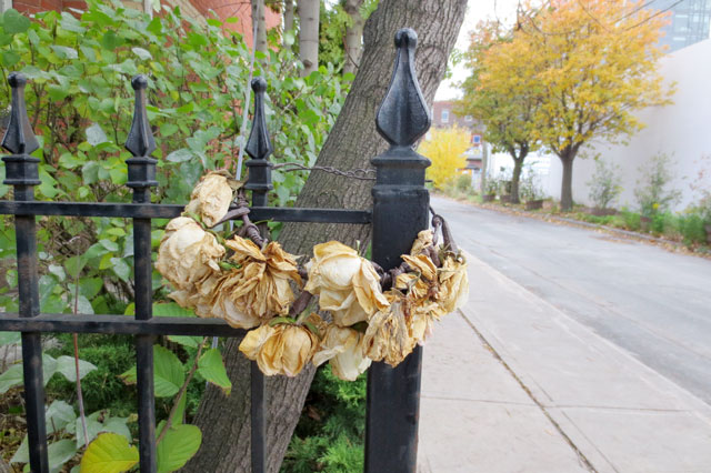 abandoned-rose-crown