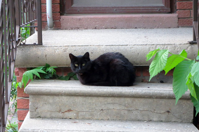 black-cat-on-steps