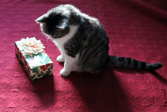 cat-with-christmas-gift-2