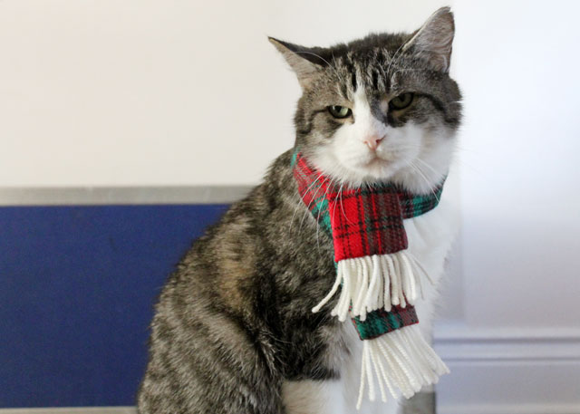 ed-wearing-christmas-scarf-01