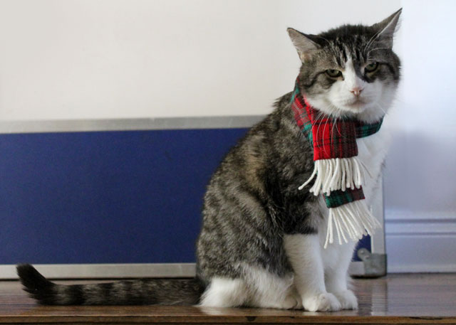 ed-wearing-christmas-scarf-05