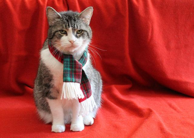 eddie-christmas-scarf-01