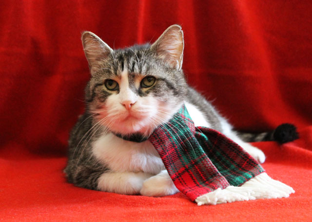 eddie-christmas-scarf-05
