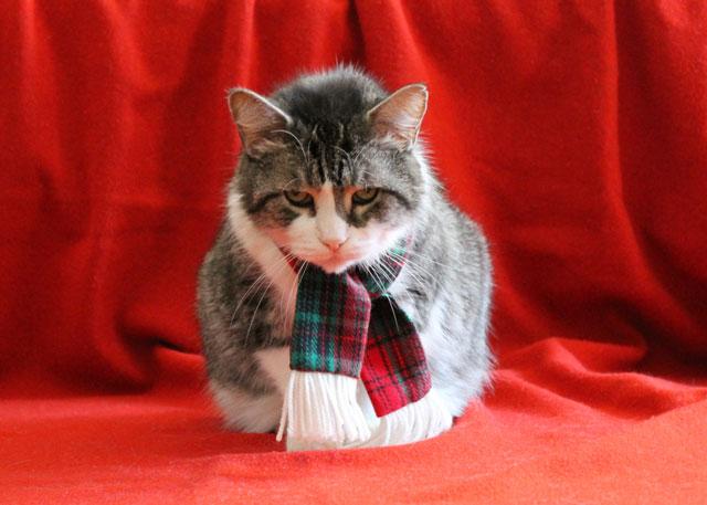 eddie-christmas-scarf-06