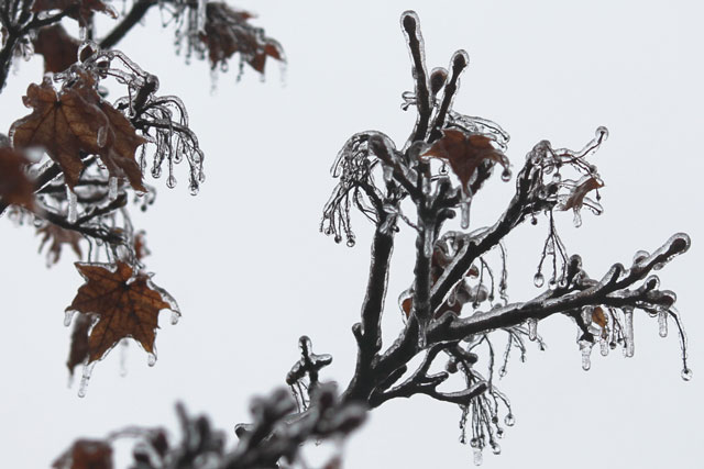 ice-on-branches-ice-storm-04