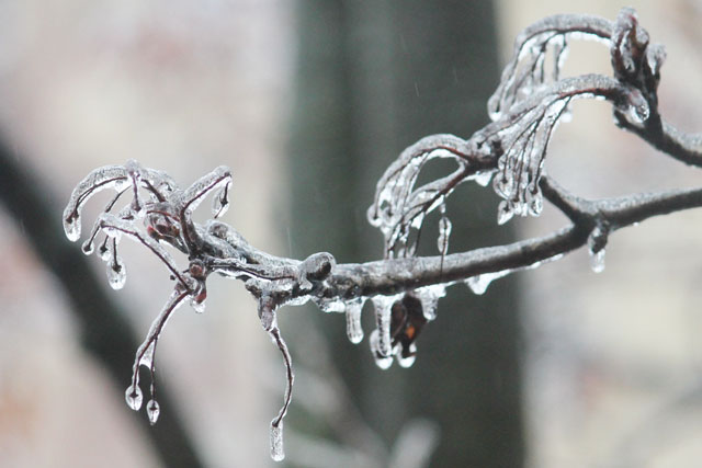 ice-on-branches-ice-storm