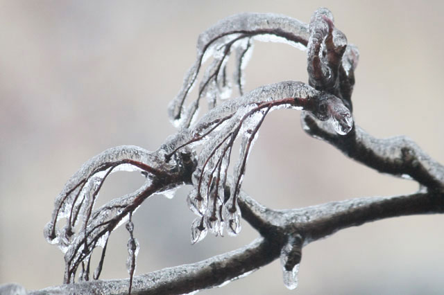 ice-storm-micro-details