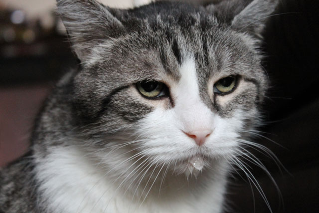cat-with-watery-chin