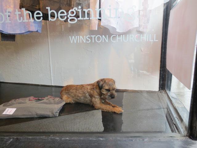 dog-in-window-3