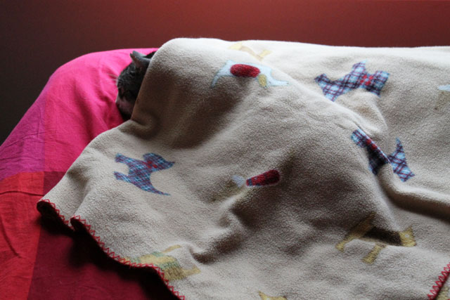 eddie-under-dog-blanket-3