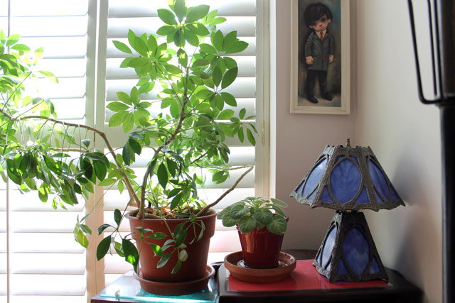house-plants-3