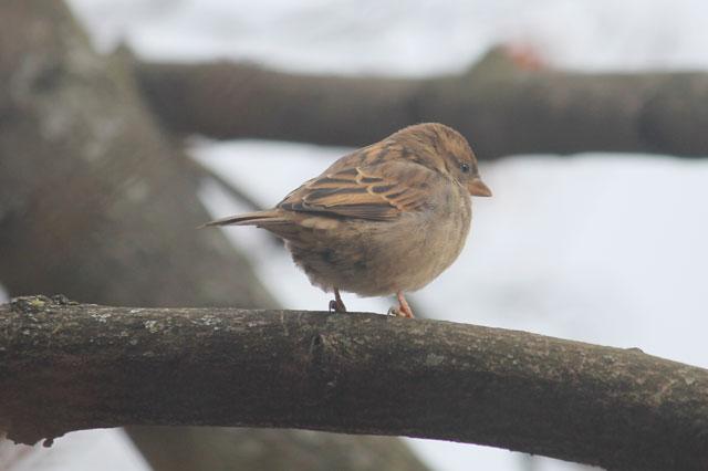 sparrow-02