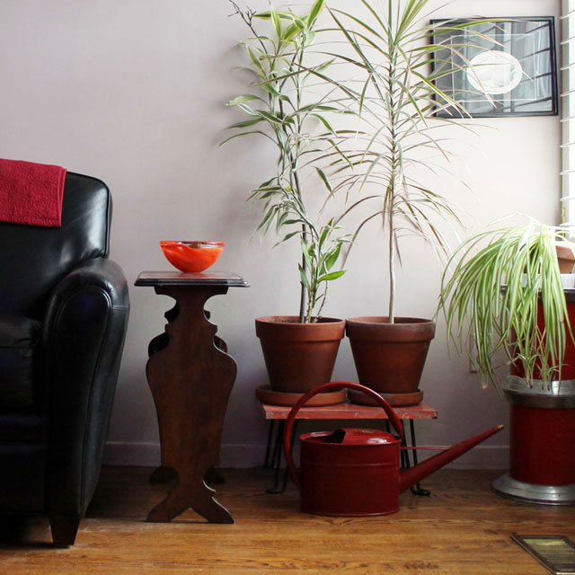 Small Water Garden Needs No Electricity Just Place Pots: House Plants And A Magical Watering Can