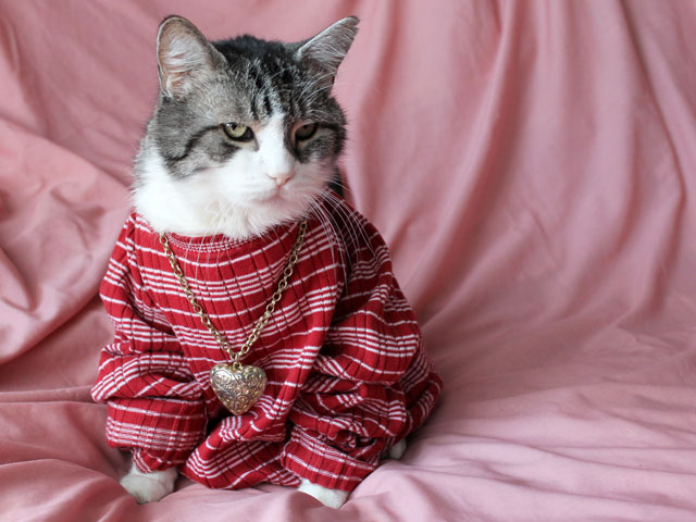 cat wearing shirt and necklace