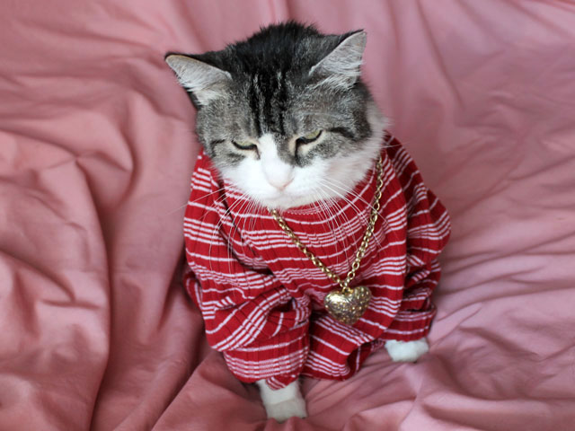 cat-in-shirt-necklace-04