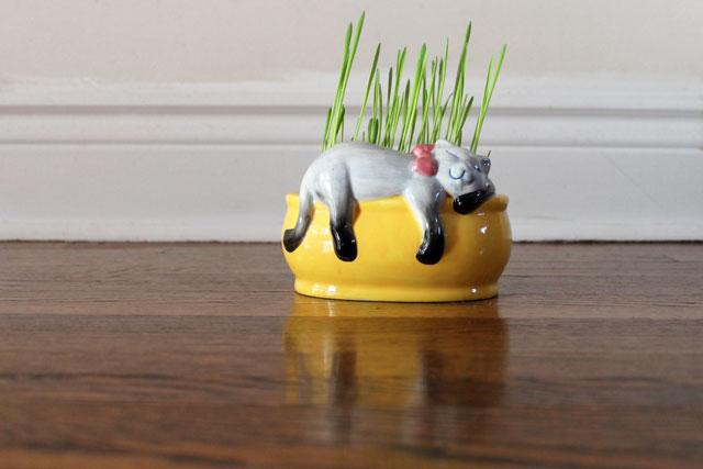 homegrown-cat-grass