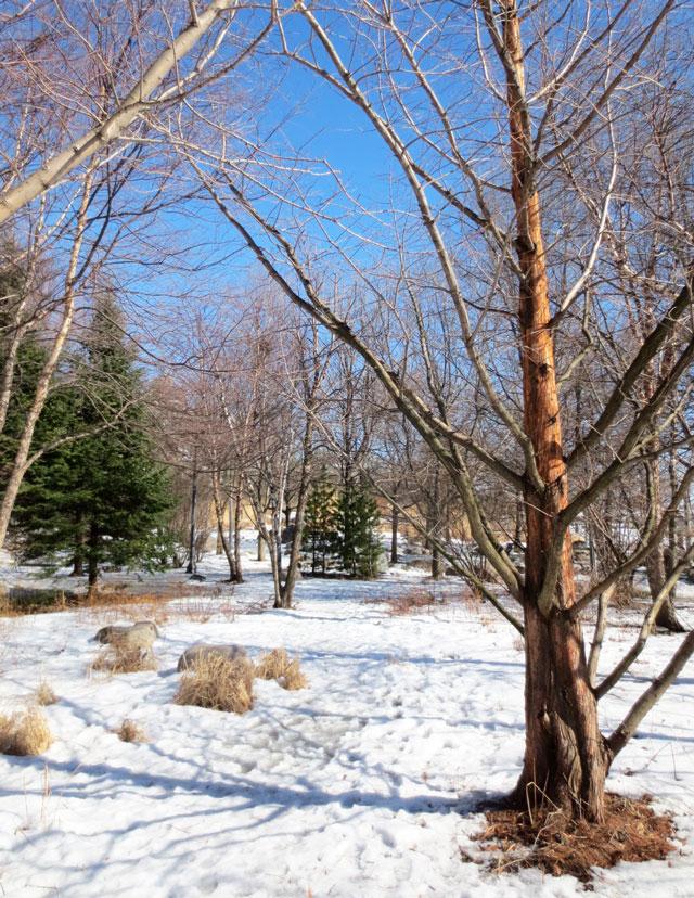 toronto-music-park-winter