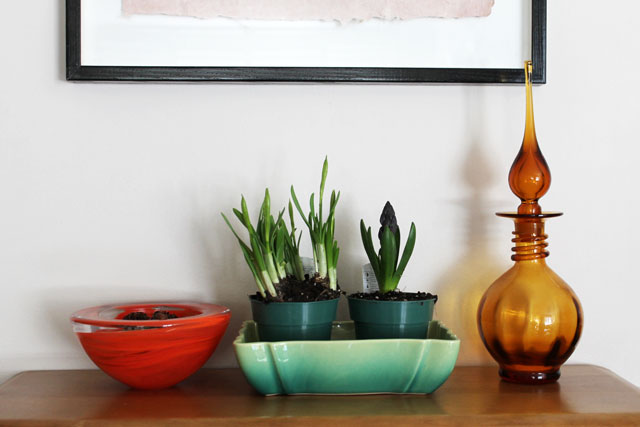 bulbs-for-indoors-day-3