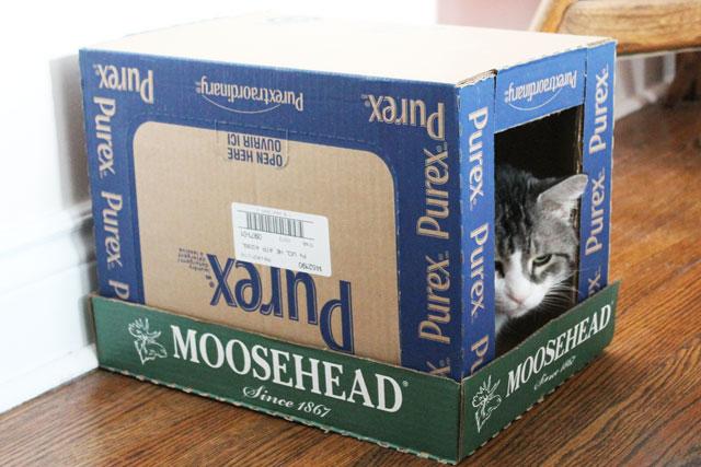 cat-in-a-box-house-3