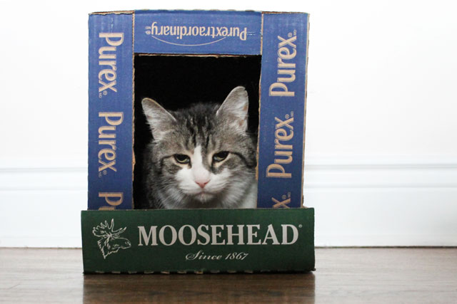 cat-in-box-house-2