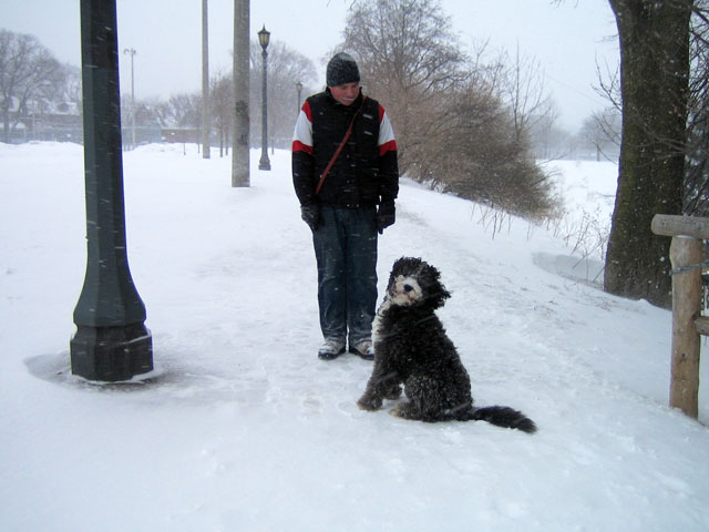 dog-in-the-snow-01