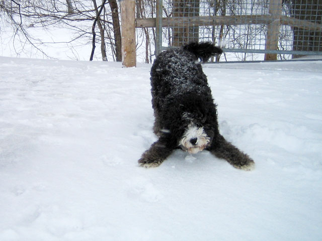 dog-in-the-snow-2