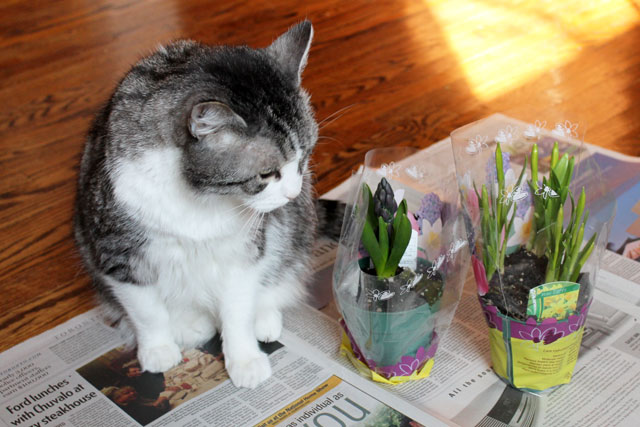 eddie-with-plants