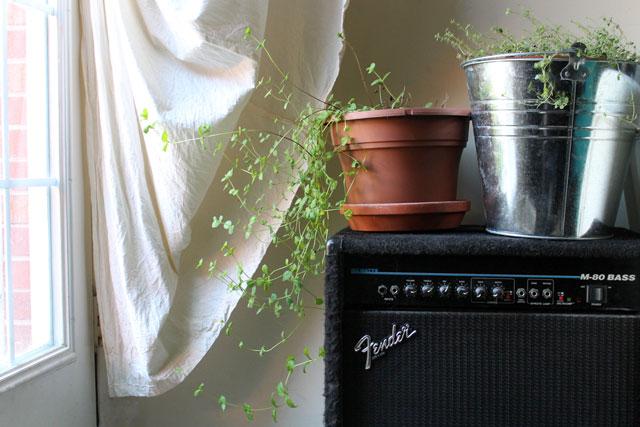 mint-grown-indoors