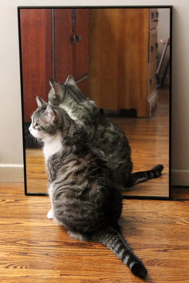 cat in a mirror
