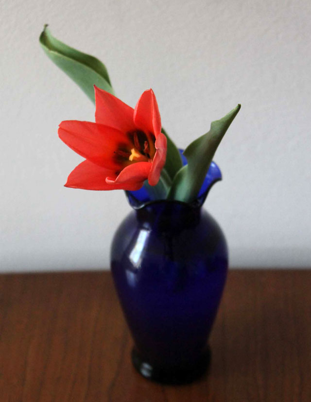 tulip in thrifted blue glass vase