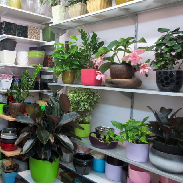 house-plants-at-shaw-flowers-and-gifts
