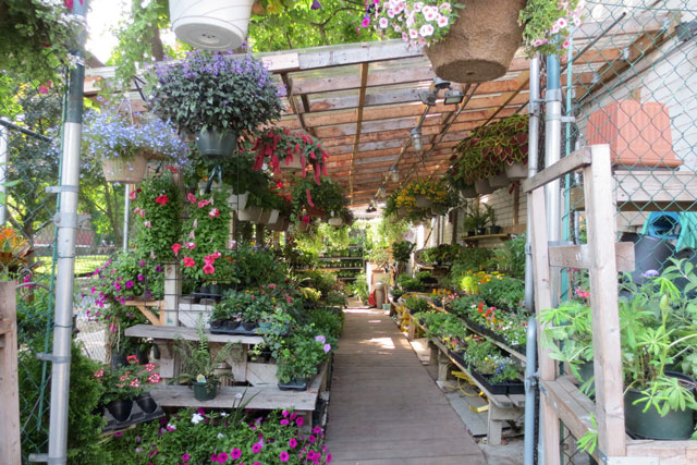 Shopping for flowers for the deck and garden shaw flowers and shaw flowers and gifts toronto outdoor plants negle Gallery