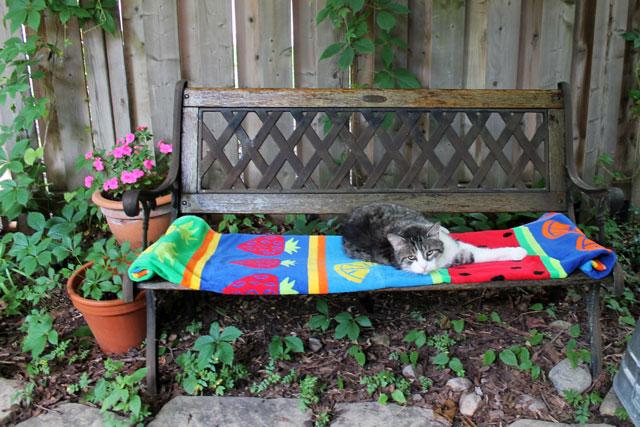 eddie-on-bench