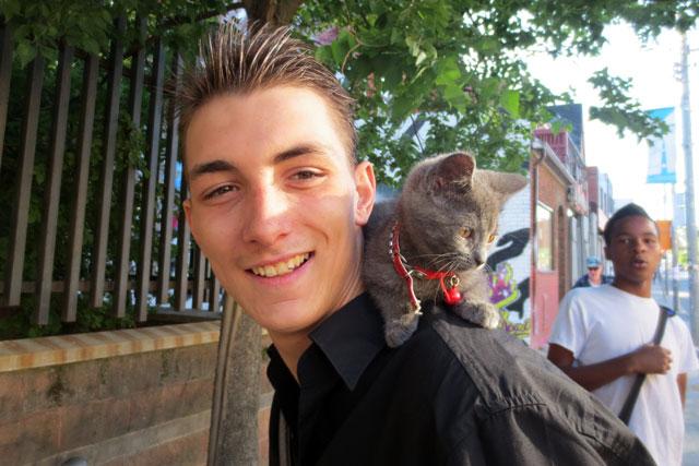 kitten-on-a-shoulder
