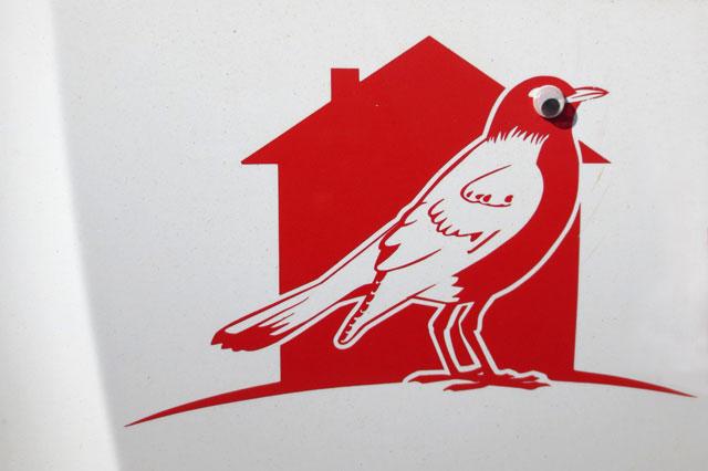 googly-eyed-robin