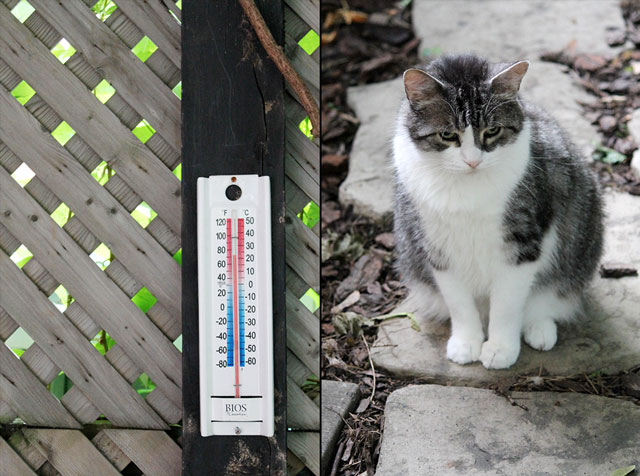 thermometer-and-eddie