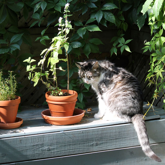 eddie-sitting-with-catnip-plant