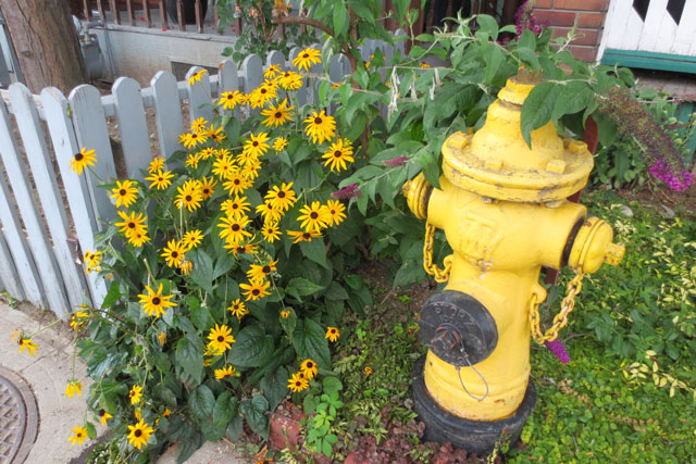fire-hydrant-and-flowers