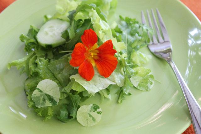 plate-of-salad-with-nasturtium-flower-02