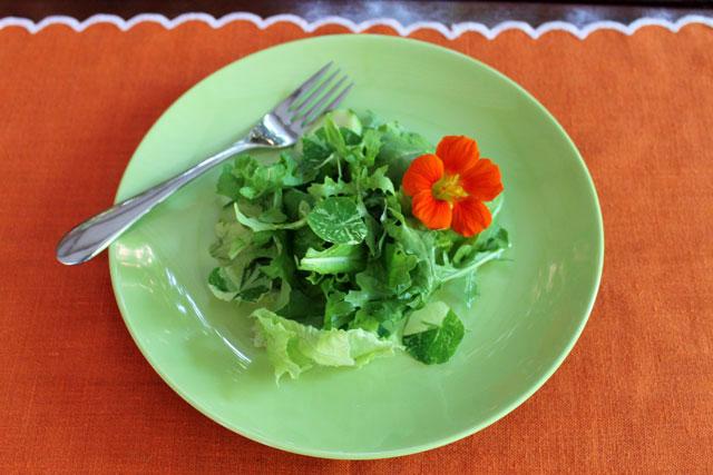 plate-of-salad-with-nasturtium-flower