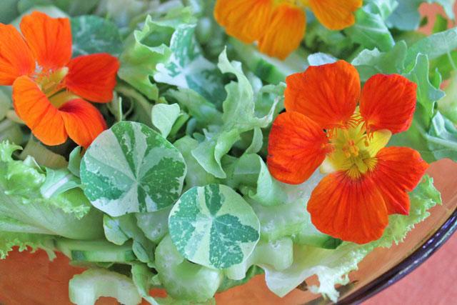 salad-with-flowers-in-it-nasturtiums