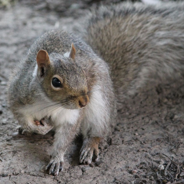 young-female-squirrel-02