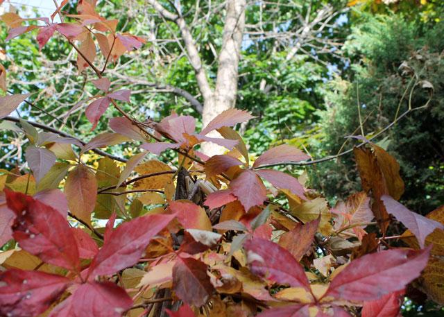 autumn-garden-02