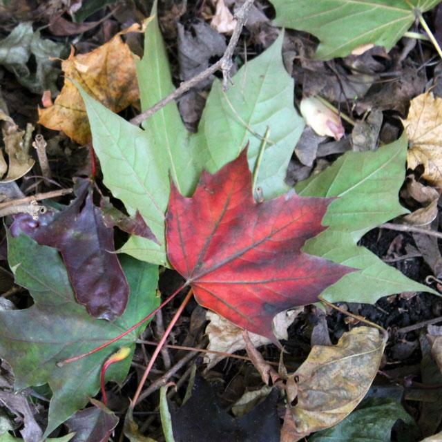 autumn-garden-03