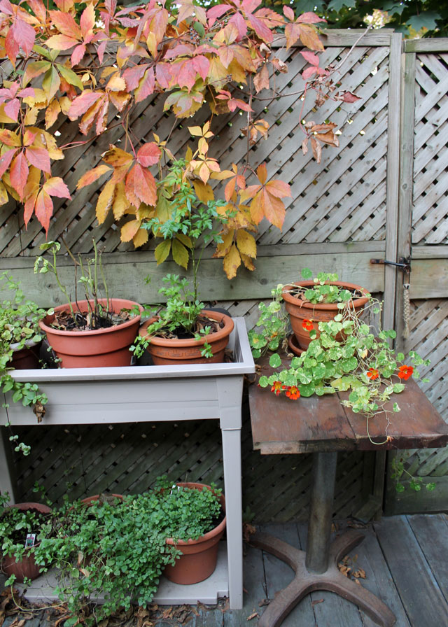 autumn-garden-04