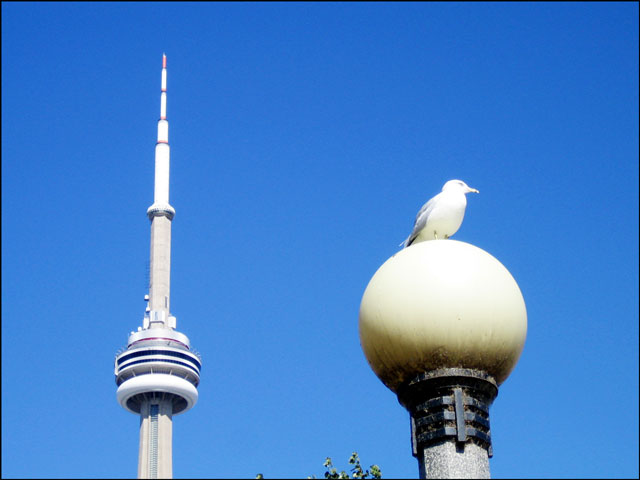 gull-on-a-lamp-post