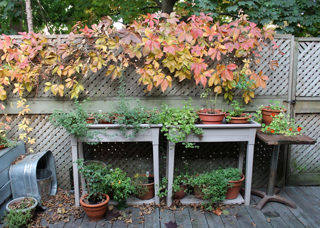 herb-garden-in-the-fall